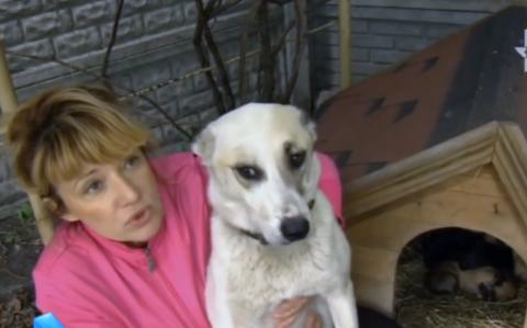 Спасение собаки с мешком щен…