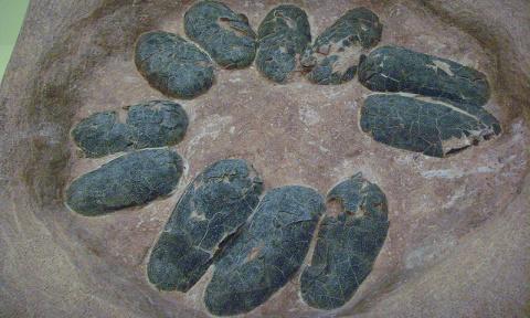 В Китае нашли кладку яиц дин…