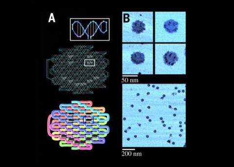 Химики на порядок увеличили размер одноцепочечного ДНК-оригами