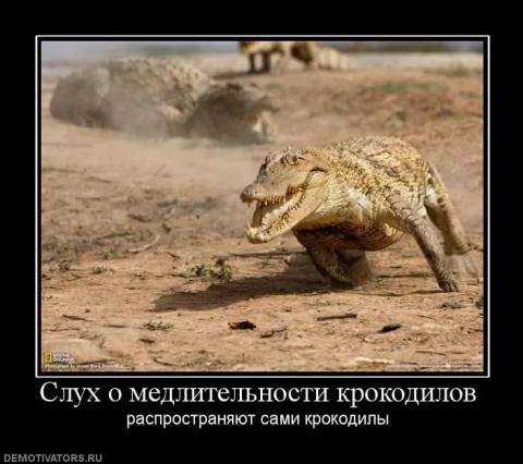Шутка с крокодилом