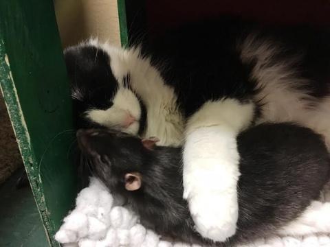 Эти собака, кот и крыса неразлучные друзья!