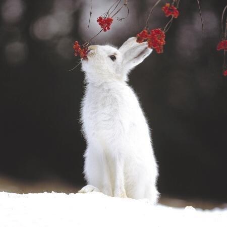 Как защитить деревья и кустарники от грызунов и зайцев