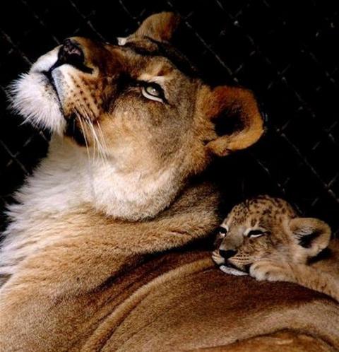 Животные и их детёныши фото подборка