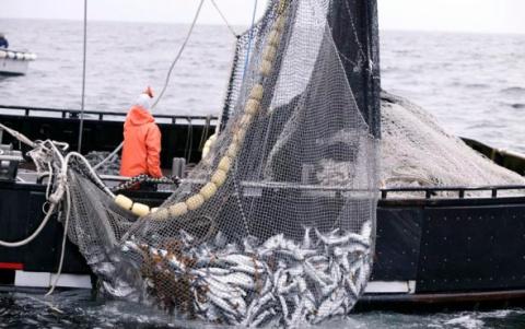 Представлен новый бренд «Карельский рыболовный флот»