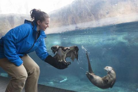 Зоопарки и океанариумы делят…