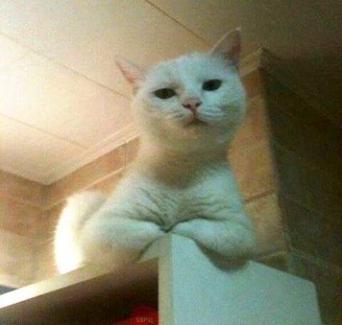 Так встречает меня кошка, когда я поздно прихожу домой