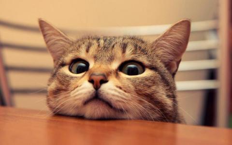 Как отбить у кота желание залезть на стол