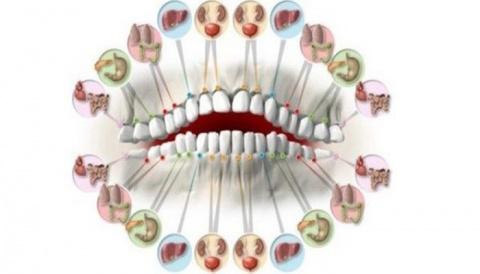 Каждый зуб связан с органом …