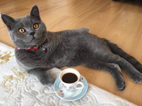 С добрым утром от котиков