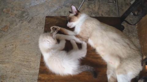 Подборка милых и забавных животных