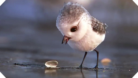 «PiPer» от студии Pixar: чем…