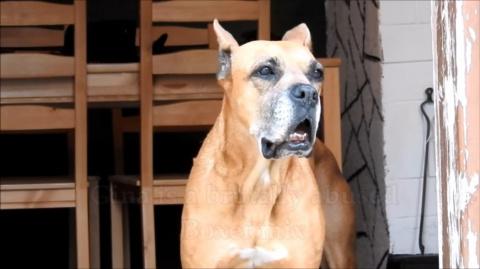 Когда-то спасенная собака са…