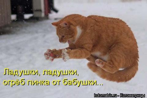 В мире животных)