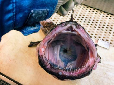 Самые жуткие существа, попавшие в сети рыбаков