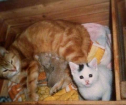 Анна и ее кошка – лучшие дру…