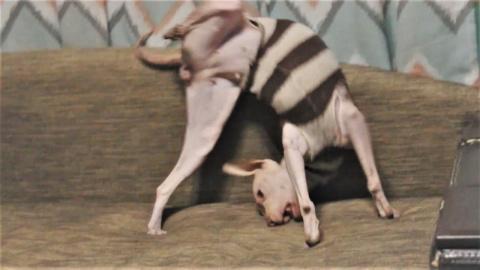 Смешные кошки и собаки ( танцы и немного милоты )