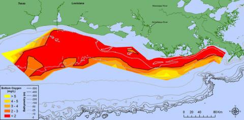 У берегов США обнаружили гигантскую «мертвую зону»