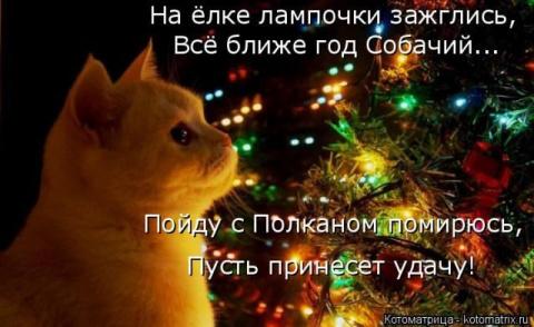 Смешные котоматрицы для вас)