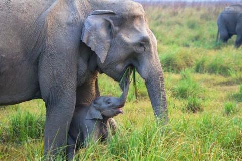 Фотоподборка дня: слоновья нежность