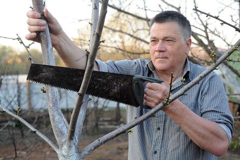 Как спасти плодовые деревья, сломавшиеся после урагана