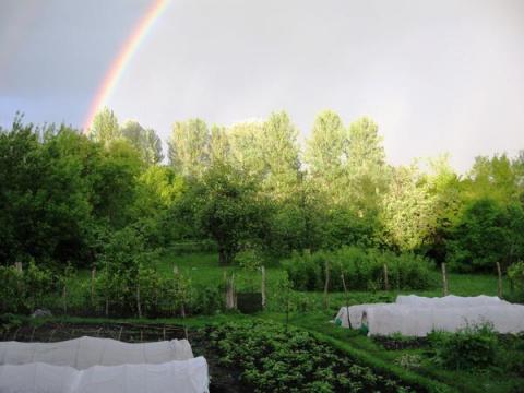 Организация огорода на деревенском подворье - из личного опыта