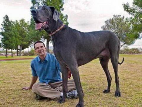 Огромная собачка