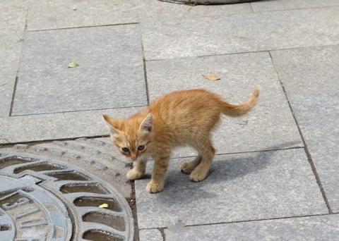 Жизнь котенка дороже денег! …