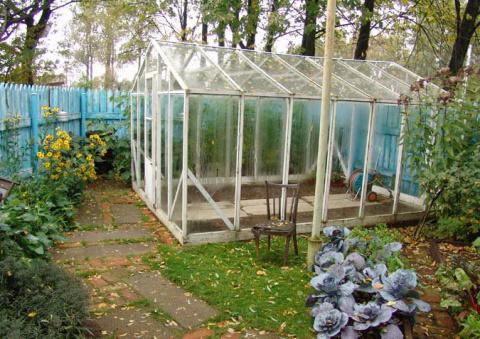 Сентябрь: Спасаем теплицу от фитофторы, а яблони от гнили