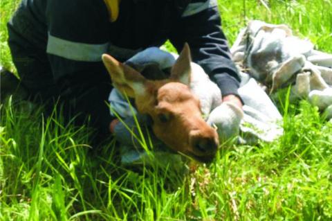 Тюменские связисты спасли от смерти лосей