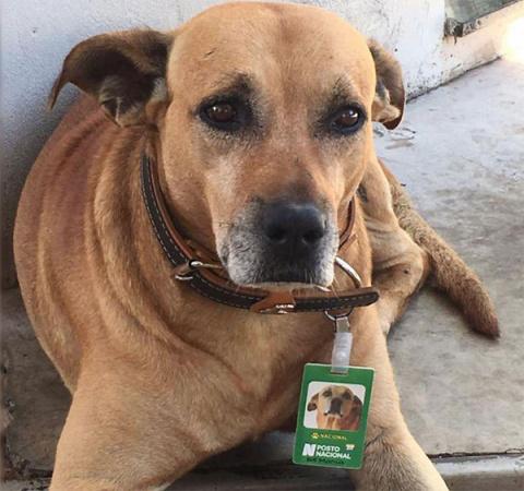 В Бразилии бездомная собака стала работником месяца на местной заправке