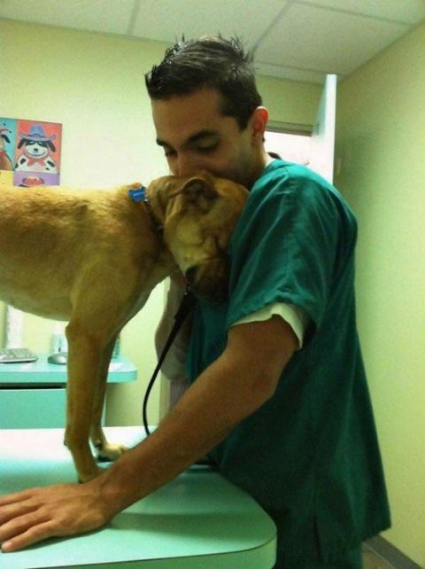 20 фото-доказательств того, что ветеринар - замечательная профессия
