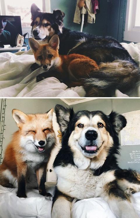 «До и После» животных, которые выросли вместе