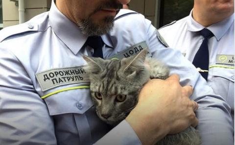 Сотрудники дорожного патруля спасли четырехмесячного котенка на Третьем Транспортном кольце
