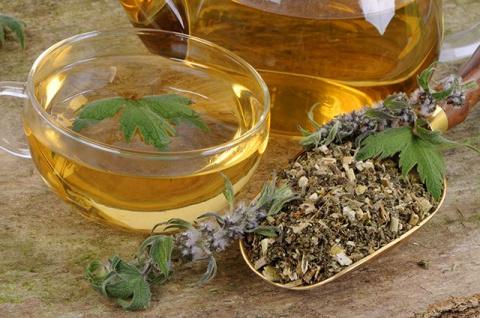 Пустырник - все лекарства в одном растении !