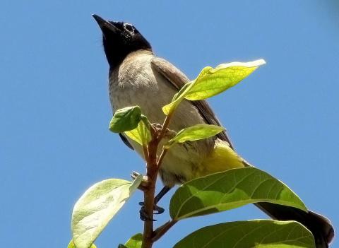 Сторожевая вышка у гнезда птенцов
