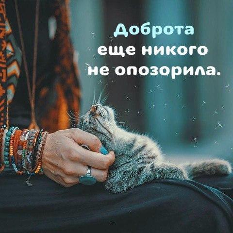 Котопост: кошки - очарование моё!