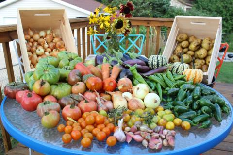 Холодное лето-2017: как получить хороший урожай в условиях плохой погоды