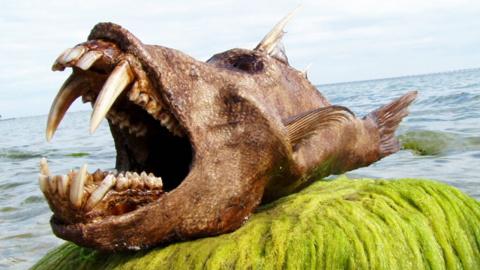 ТОП-5 океанских монстров
