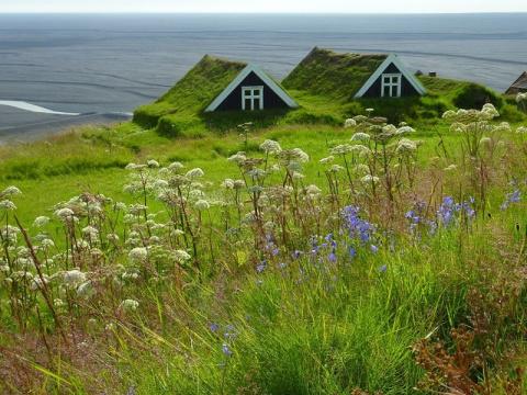 Самая экологичная кровля: мох и газоны на крышах домов