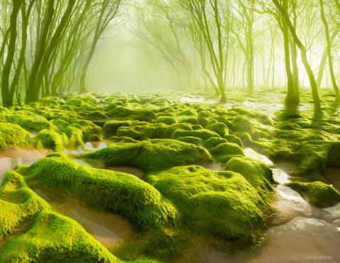 Удивительныя природа в фотоманипуляциях Adrian Borda