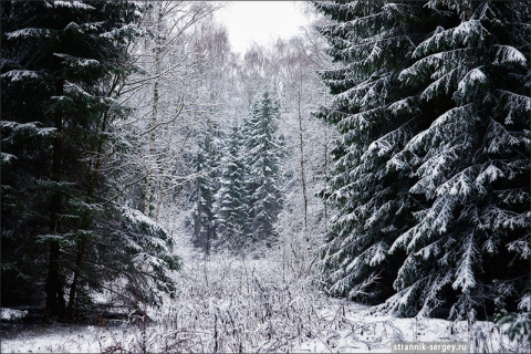 Радонеж: среди белых холмов и синих лесов
