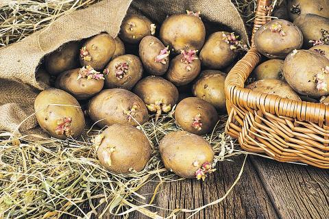 Необычных и эффективных способов посадки картофеля
