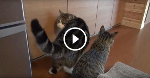 Кот сам не смог открыть шкаф…