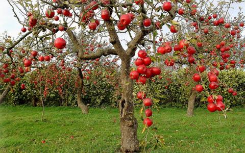 Важно знать: совместимость деревьев и кустарников в саду