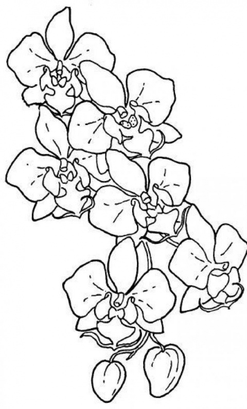 Дикие Орхидеи(шарф). МК, роспись по батику от Виктории Игнатовой.