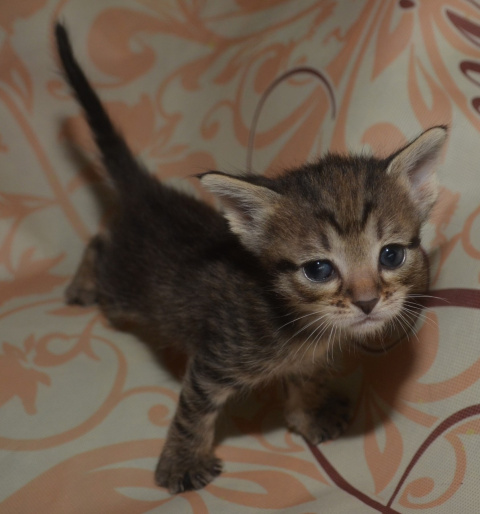 Котятам нужен дом