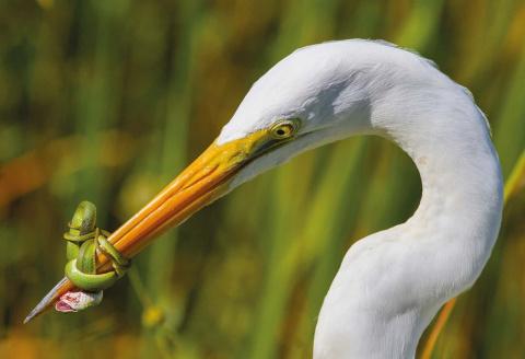 Победители орнитологического фотоконкурса Bird Photographer of the Year 2017