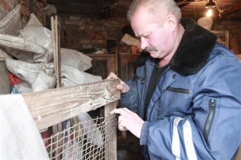 В Туле неизвестный крупный хищник убил, но не съел кроликов