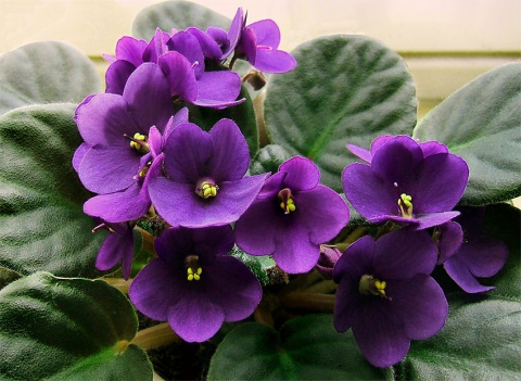 Топ-10 самых популярных комнатных растений