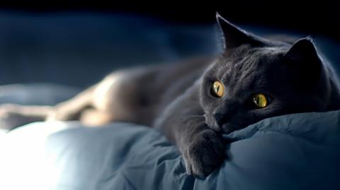 Кошка — спаситель. Мистика?